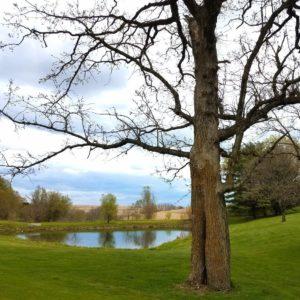 Hickory Grove Hole 6 pond